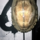 Schildpad op zwarte voet H28 | B14