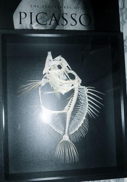 Vitrinekast zwart met skelet van zonnevis H30 | B37